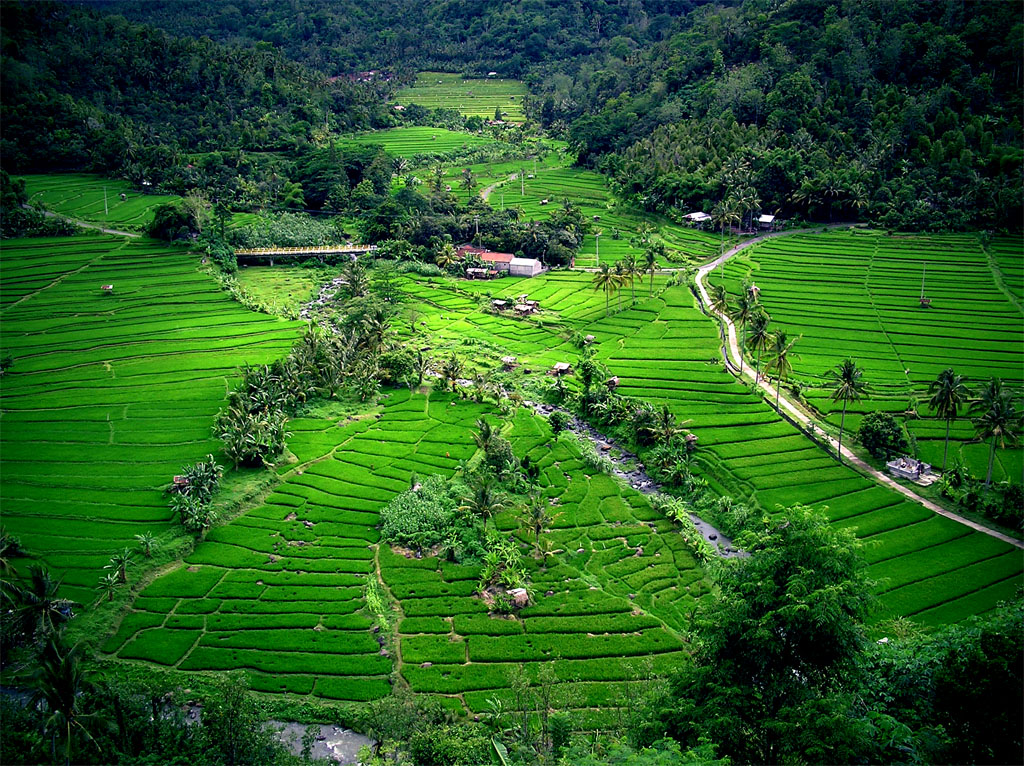Фото природы Бали