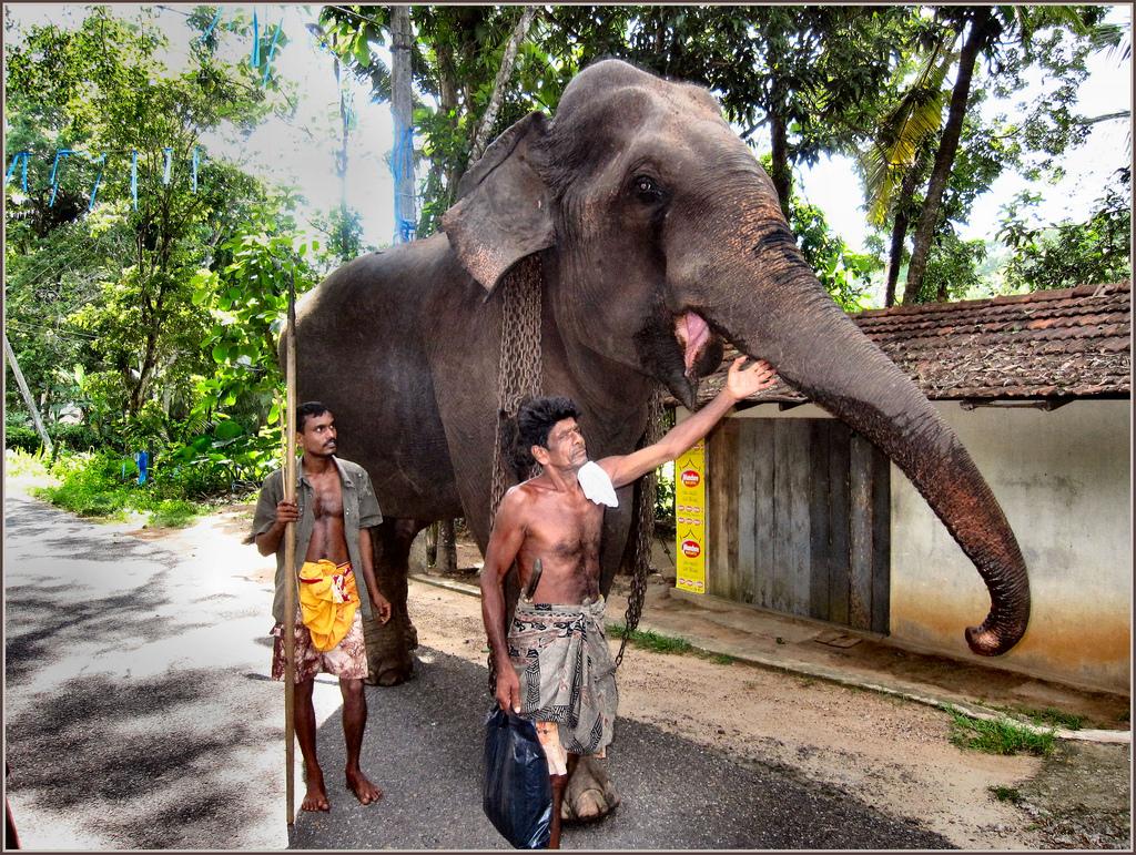 Фото жителей Шри-Ланки