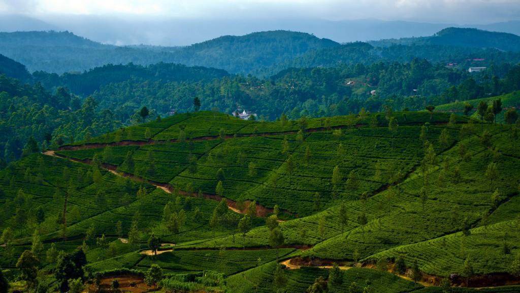 Фото гор Шри-Ланки