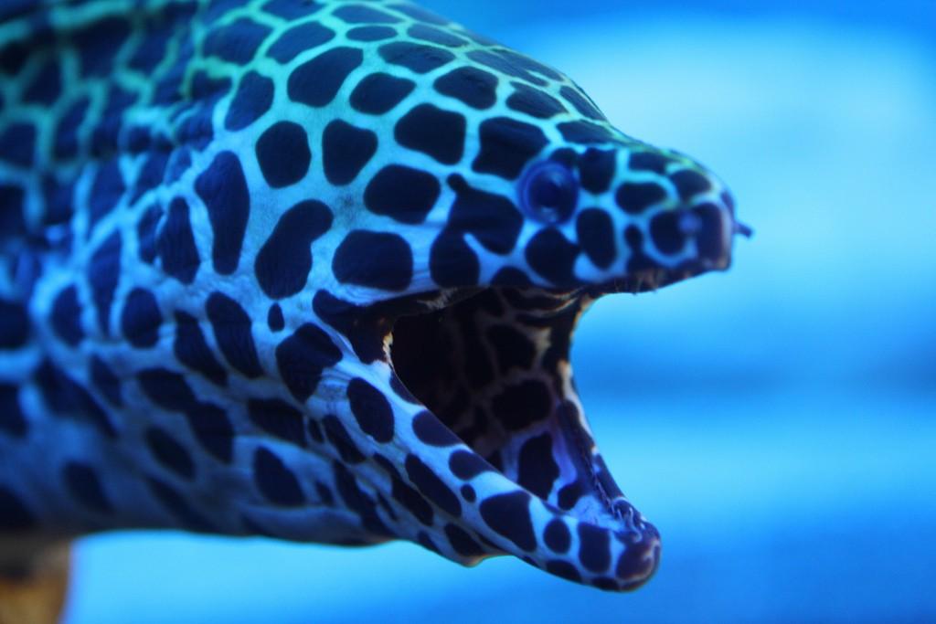 Фото сочинского океанариума