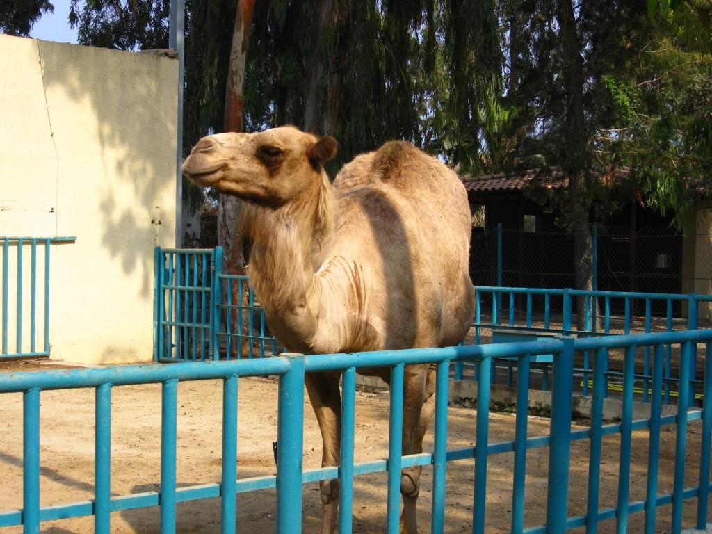 Фото из зоопарка Лимасола