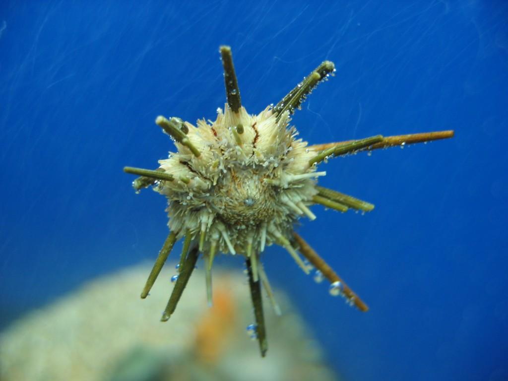 Фото из Океанариума CretAquarium в Ираклионе