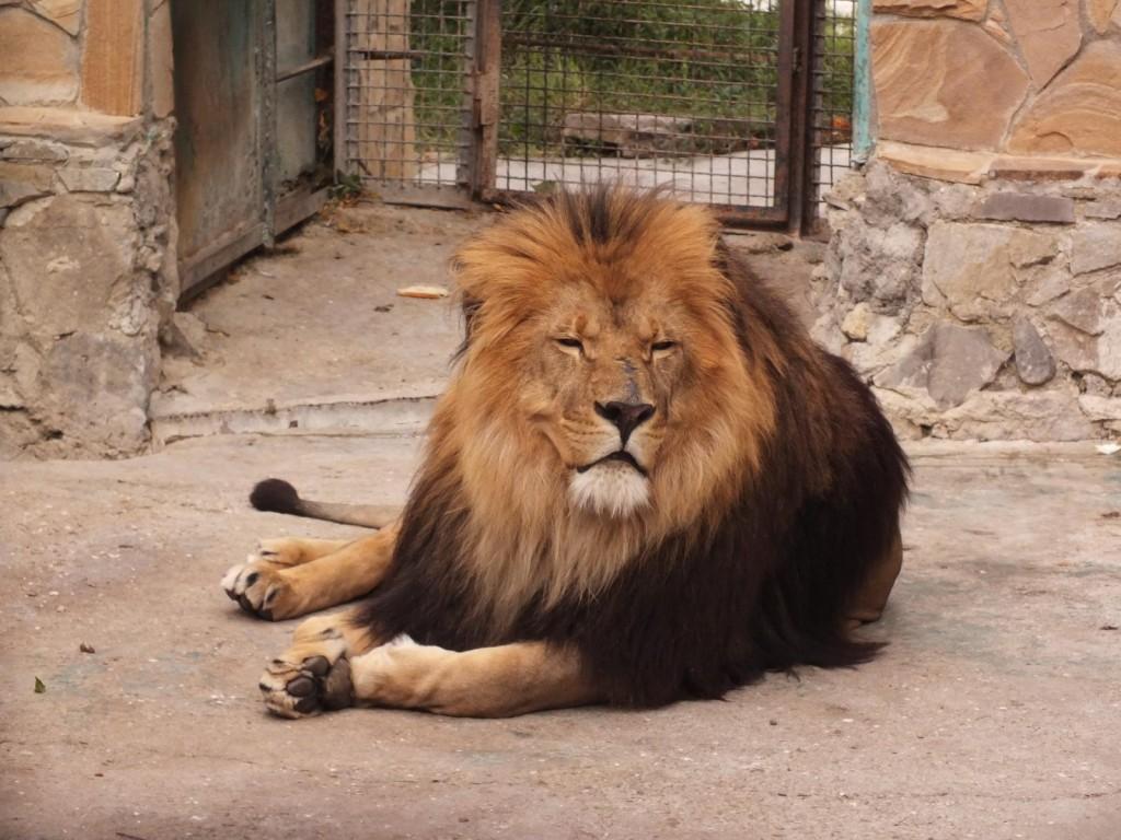 Фото зоопарка «Сказка» в Ялте