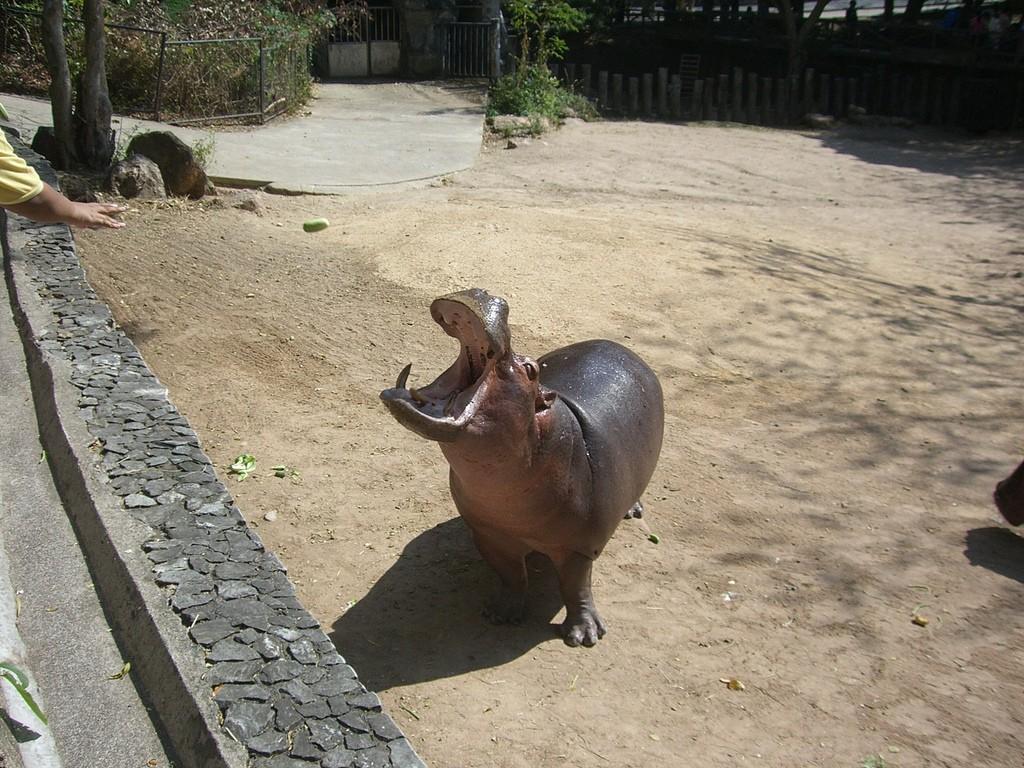 Фото зоопарка Кхао Кхео в Паттайе