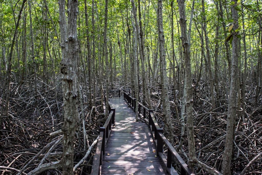 Фото мангровой рощи недалеко от Хуа Хина